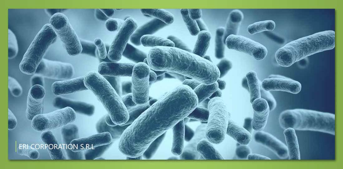 Rotor-antibacterial